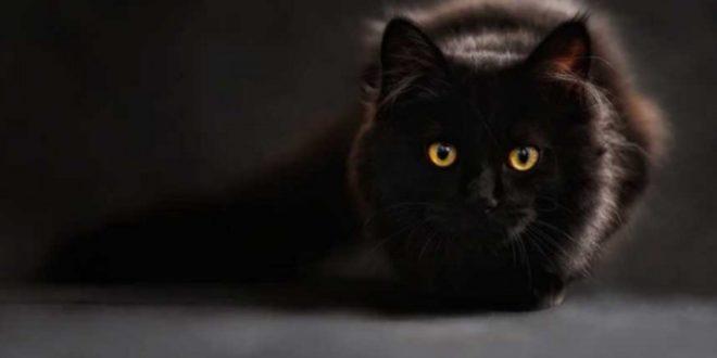 U Belgiji vlasnik zarazio mačku korona virusom